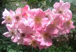 God created Spring